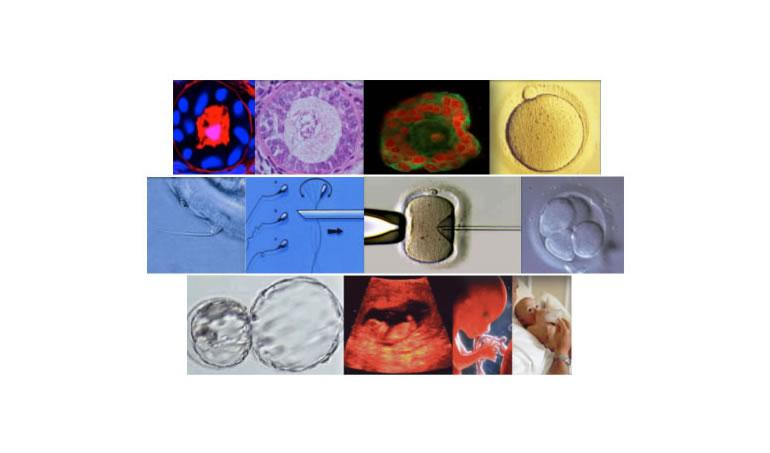Advanced course in Human oocytes, embryo and ovarian tissue vitrification